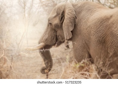 Side view of elephant in south Africa, kruger national park