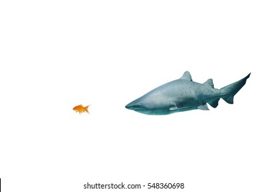 Side view of fish swimming against shark swimming in fish tank