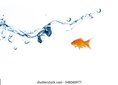 Side view of fish swimming against close up on blue sparkling water