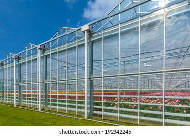 Side view of a greenhouse with blooming flowers inside