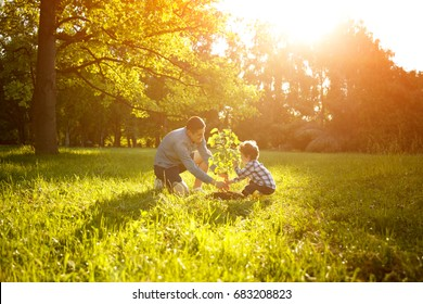 Side view of happy man with son planting tree on meadow in back lit.