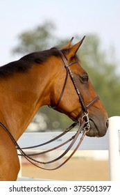 A side view of the side of a horse standing at a horse show