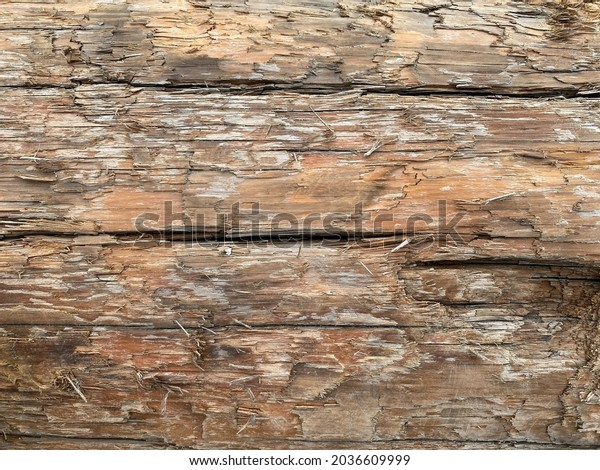 side view looking at old weathered fallen tree trunk