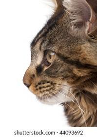 Cat Profile Images, St...