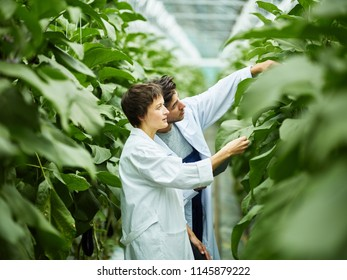 Side view of man and woman in white coats taking care of lush green plants working in agronomy complex