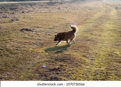 Side view of the mongrel dog running through the meadow. contour light