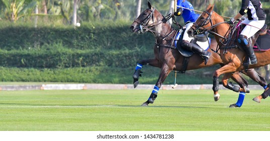 Side view picture of the Horse Polo Player are battle in match.