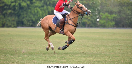 Side view picture of the Horse Polo player is using polo mallet hit polo balls during the match.