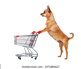 Side view pictutre of Chihuahua with shopping cart