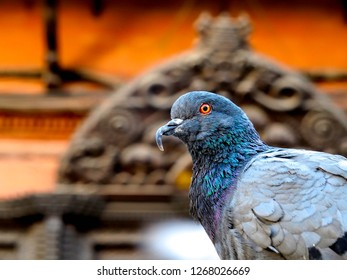 The side view of pigeon with temple as the background