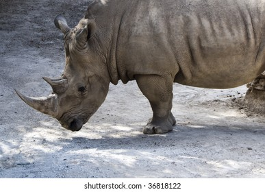 a side view of a rhinoceros at rest