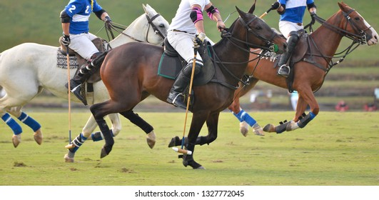 Side view, Selective focus of polo pony running in polo match.