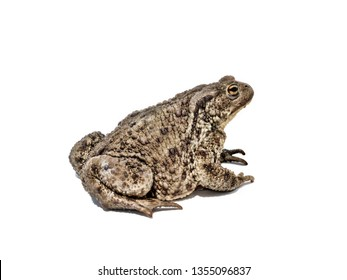 Side view shot of toad on white background