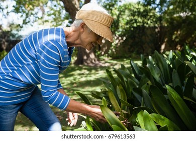 Side view of smiling senior woman looking at plants in backyard