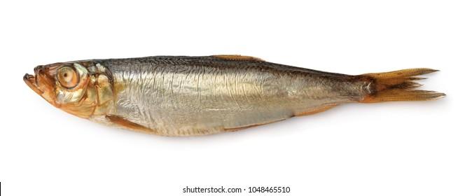 Side view of smoked european sprat isolated on white