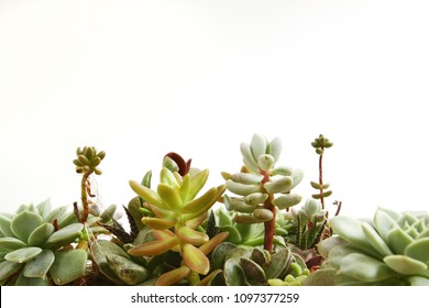 Side view of tight succulent garden at bottom boarder of frame with copy space available