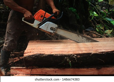 A side view of a tree trunk being cut in even pieces with a running chainsaw, an example of illegal deforestation