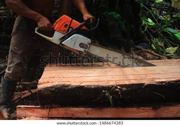 side-view-tree-trunk-being-600w-14866743