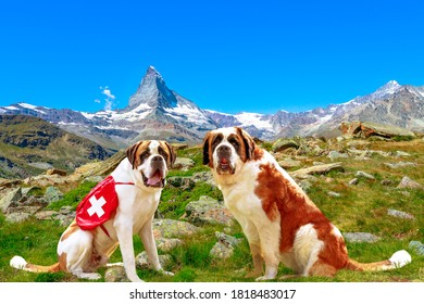 Side view of two St. Bernard rescue dogs standing in Zermatt, Canton of Valais, Switzerland, with Mount Matterhorn or Monte Cervino or Mont Cervin along the 5 Lakes Walk from Sunnegga.