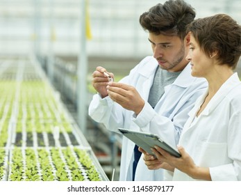 Side view of woman with tablet and man taking soil sample while researching contemporary agricultural glasshouse