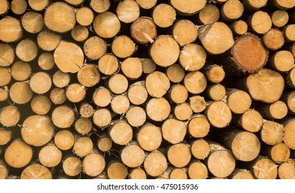 Side view of wooden logs