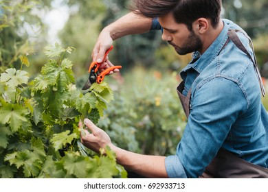 side view of young gardener with pruning shears cutting plant in garden