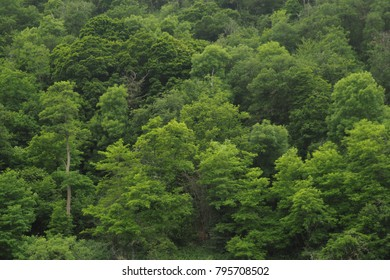 Sidehill in Europe is covered with forests of all shades of vivid green in summer