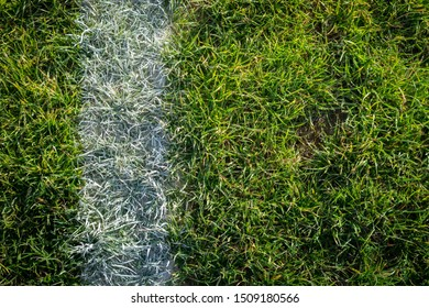 Sideline Painted on Green Grass on a Sports Field Close Up with Copy Space