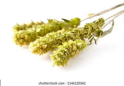 Sideritis  scardica isolated on white backgroundSeveral herbs stems of a mountain tea Sideritis Scardica isolated on white background. The herb is called The Green Hero of the Planet.