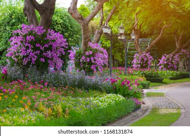 Sidewalk in the Blooming relaxation garden, Outdoor flowers gardening in nature park, artificial light, copy space, selective focus