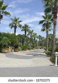 Sidewalk Lined with Palm Trees