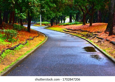 Sidewalk in the park after rain at evening. Long shutter.