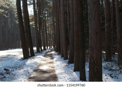 Sidewalk through a group of trees on a sunny winter day