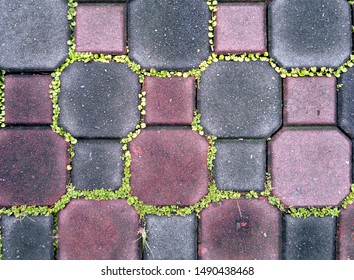 Sidewalk tile pattern with small plants growing in the cracks