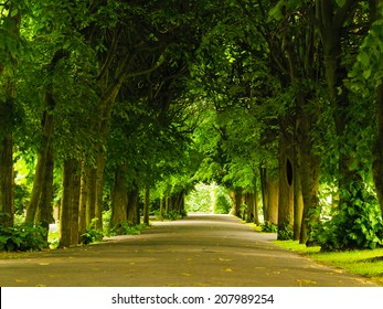 sidewalk walking pavement alley path with trees in park. nature landscape. summer walk.
