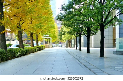 sidewalk with yellow tree during autumn season in Tokyo Japan