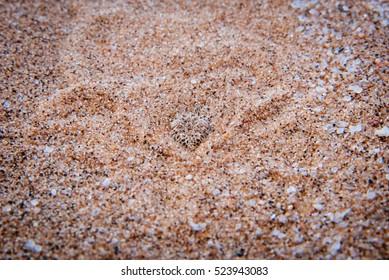 Bury Head In Sand Images, Stock Photos & Vectors | Shutterstock