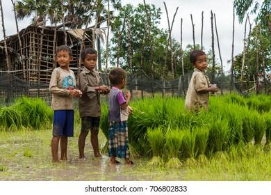 SIEM REAP, CAMBODIA - 9/12/2015: A group of boys gather near rice on their village farm.