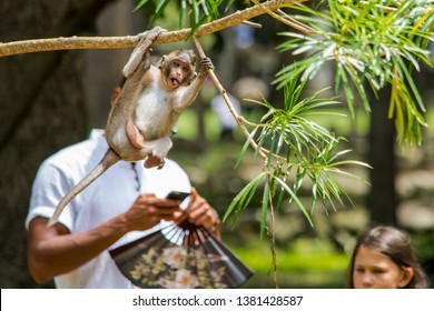 SIEM REAP, CAMBODIA - Aug 12, 2017: A photo of a young macaque monkey taken at the exact moment, in replacing the face of a man behind it. Monkey photobomb. Cambodia, Sout East Asia