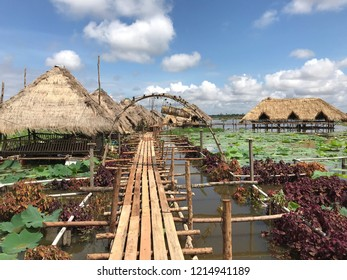 Siem Reap, Cambodia - September, 2018: One of the lotus farms opened for tourist in Siem Reap.