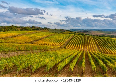 Siena, Chianti: November 20 2020: panorama of the Chianti vineyards in autumn