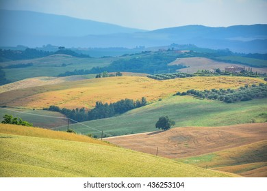 SIENNA, ITALY - JUNE 12, 2016 - magnificent colors of the Tuscan hills with yellow wheat fields orange and green meadows with isolated farmhouses the dark blue sky after the storm  province of Siena