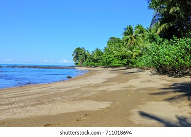 Sierpe river mangrove Costa Rica