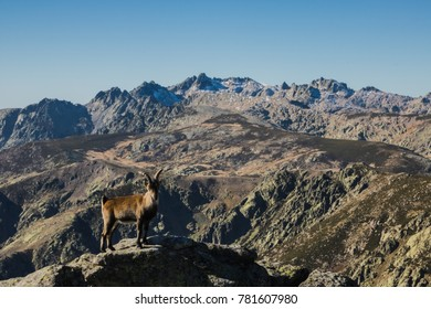 Sierra de Gredos. Spain