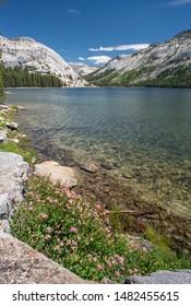 Sierra Lake And Wildflowers Near Yosemite