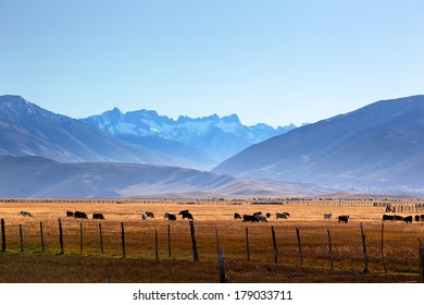 The Sierra Nevada Sawtooth Ridge, cattle on range land from Highway 395, Hoover Wilderness, Humboldt-Toiyabe National Forest, Eastern edge of Yosemite National Park, near Bridgeport, California.