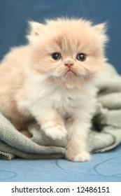 Sight of a small nice fluffy kitten