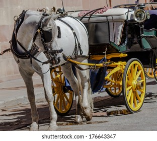 Sightseeing with horse drawn carriage