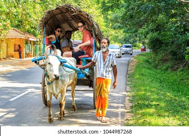 Sigiriya, Sri Lanka - January 4, 2018. Man in the sarong is leading an ox with a cart on the road during an excursion with tourists