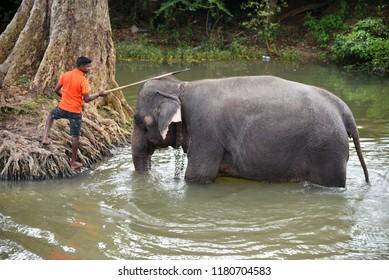 SIGIRIYA,SRI LANKA - FEBRUARY 03.2018:  man take his elephant for a bath on February 03,2018 in Sigiriya, Sri Lanka